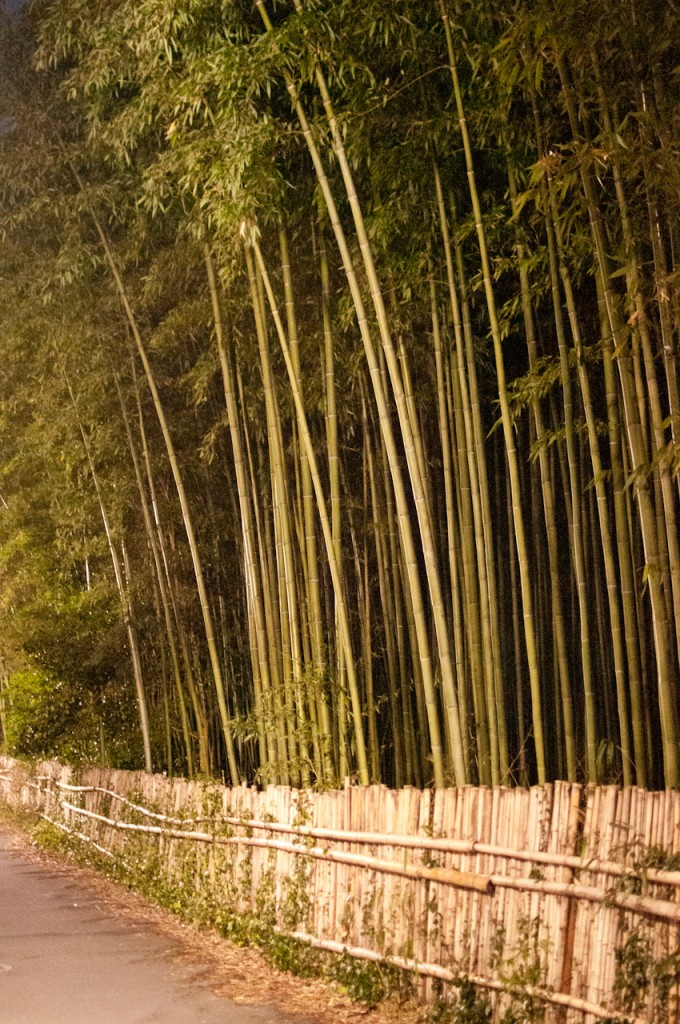 Sagano Bamboo Groves